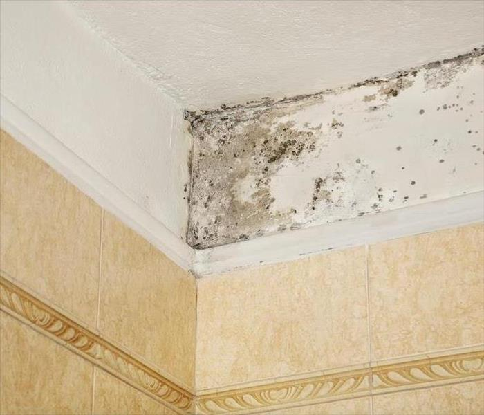 Mold Remediation Is There a Good Mold That Can Grow in Your Sky Lake Home?