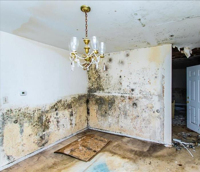 Mold Remediation Never Get Stressed When Your Pine Castle Property Experiences Mold Damage