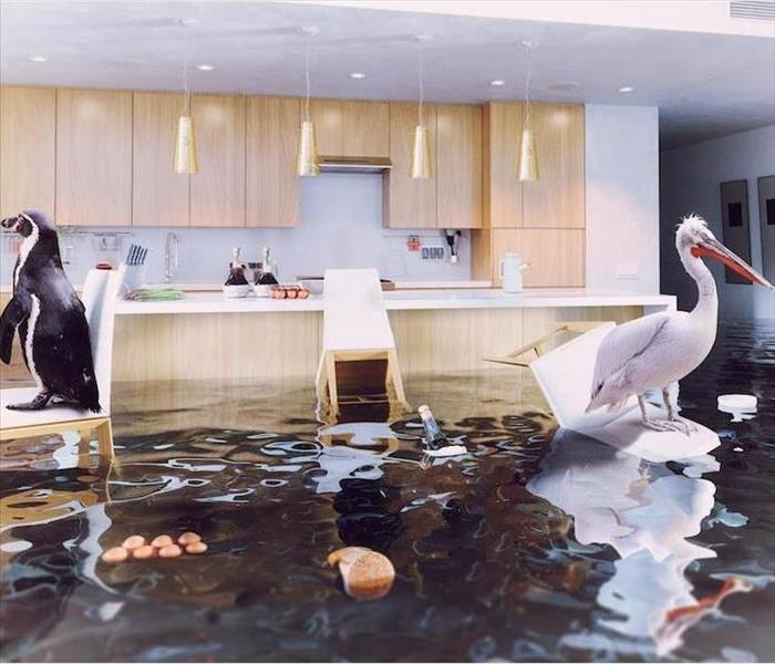 Water Damage Water Removal is a Process in Sky Lake