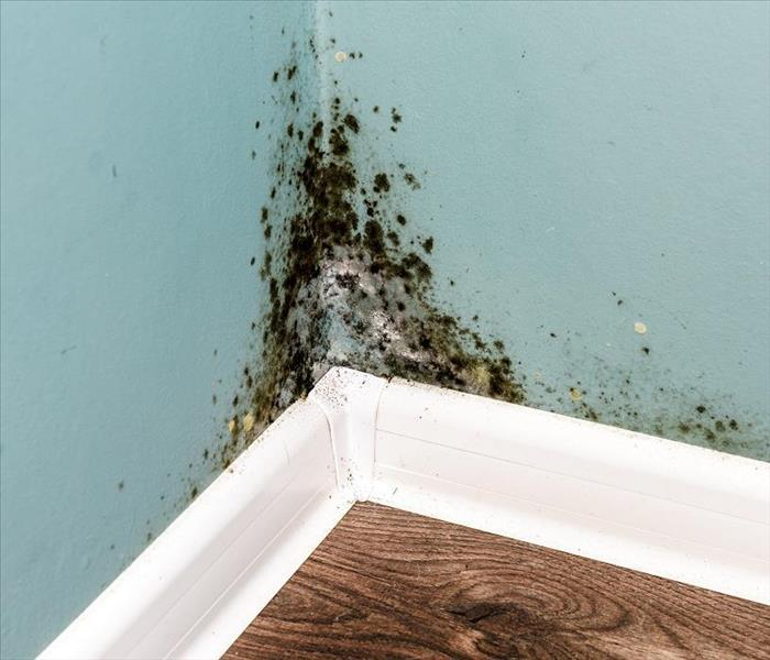 Mold Remediation  Questions You Might Have About Black Mold Damage in Edgewood